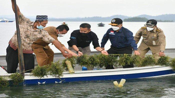 Potensi Rumput Laut